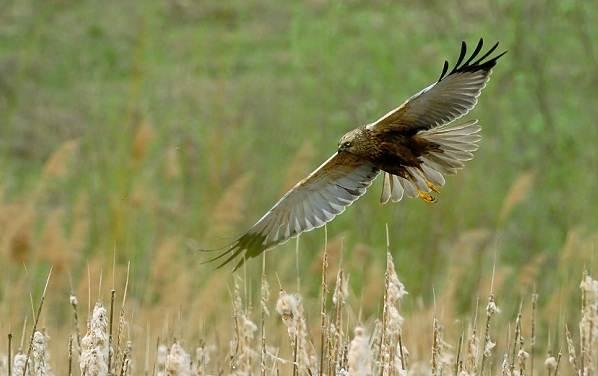 Птицы-Сибири-Описания-названия-и-особенности-птиц-Сибири-59