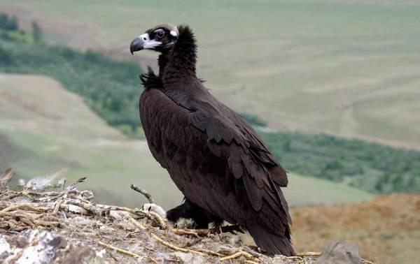 Птицы-Сибири-Описания-названия-и-особенности-птиц-Сибири-66