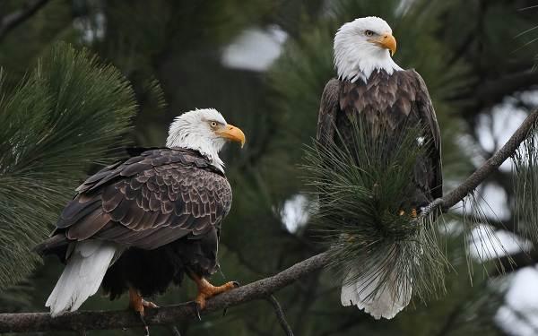 Птицы-Сибири-Описания-названия-и-особенности-птиц-Сибири-68