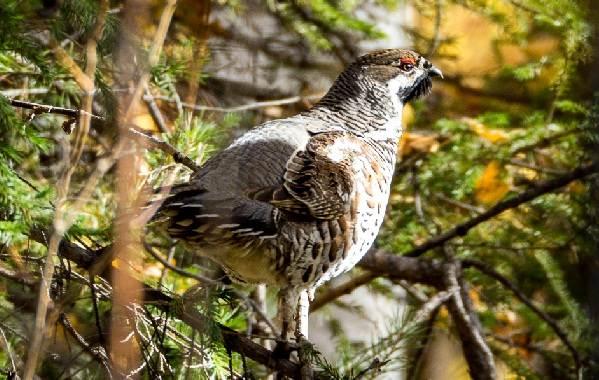Птицы-Сибири-Описания-названия-и-особенности-птиц-Сибири-76