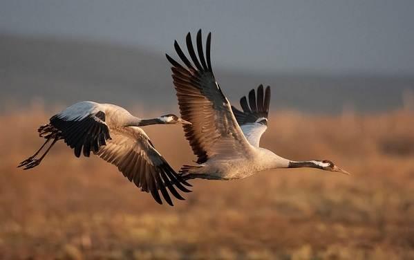 Птицы-Сибири-Описания-названия-и-особенности-птиц-Сибири-90