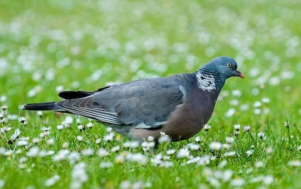 Птицы-Сибири-Описания-названия-и-особенности-птиц-Сибири-96