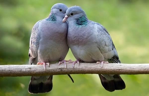 Птицы-Сибири-Описания-названия-и-особенности-птиц-Сибири-98