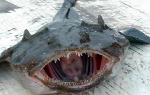 Рыба-дьявол-Описание-особенности-виды-и-среда-обитания-рыбы-дьявол-1