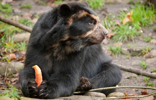 Виды-медведей-Описание-названия-и-особенности-медведей-13