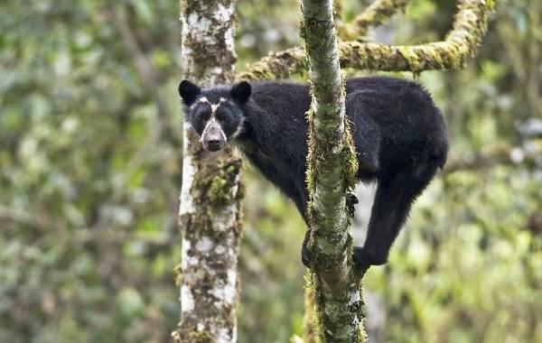 Виды-медведей-Описание-названия-и-особенности-медведей-14