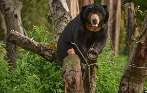 Виды-медведей-Описание-названия-и-особенности-медведей-17