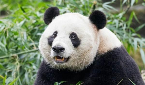 Виды-медведей-Описание-названия-и-особенности-медведей-21