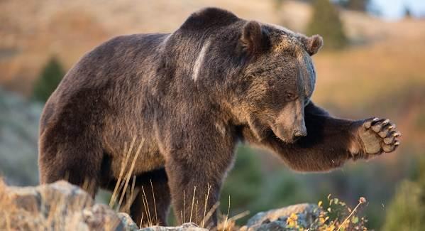 Виды-медведей-Описание-названия-и-особенности-медведей-33