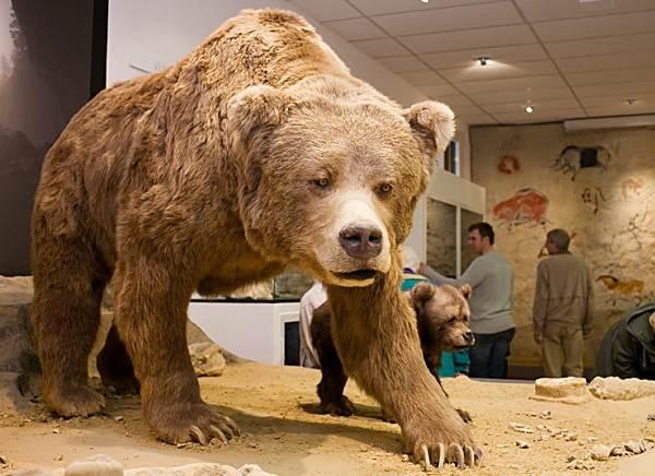 Виды-медведей-Описание-названия-и-особенности-медведей-34