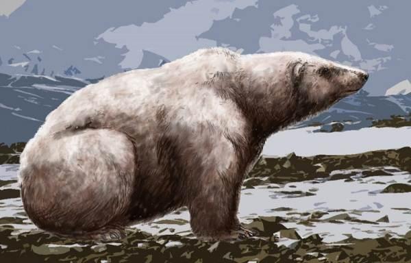 Виды-медведей-Описание-названия-и-особенности-медведей-36