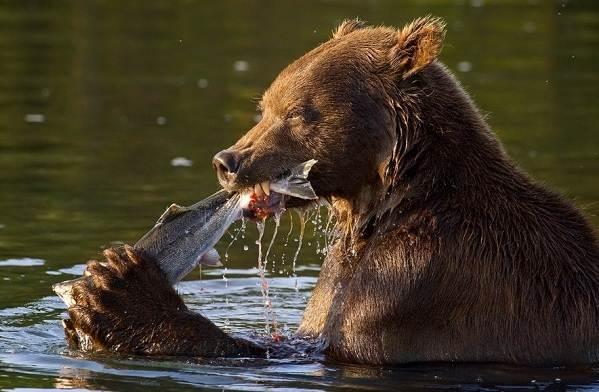 Виды-медведей-Описание-названия-и-особенности-медведей-4