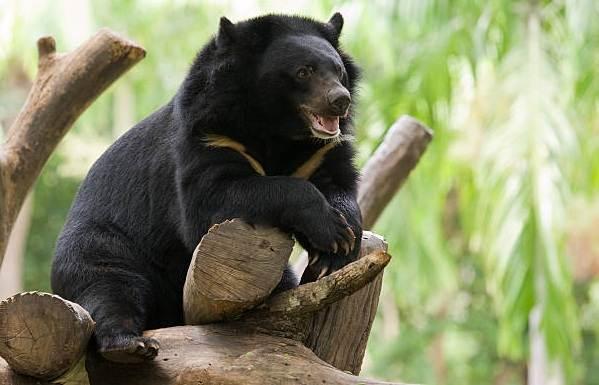 Виды-медведей-Описание-названия-и-особенности-медведей-8