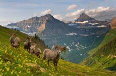 Животные Алтайского края. Описания, названия и особенности животных Алтая