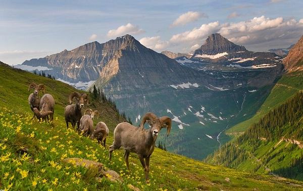 Животные-Алтайского-края-Описания-названия-и-особенности-животных-Алтая-1