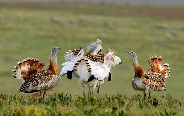 Животные-Алтайского-края-Описания-названия-и-особенности-животных-Алтая-10