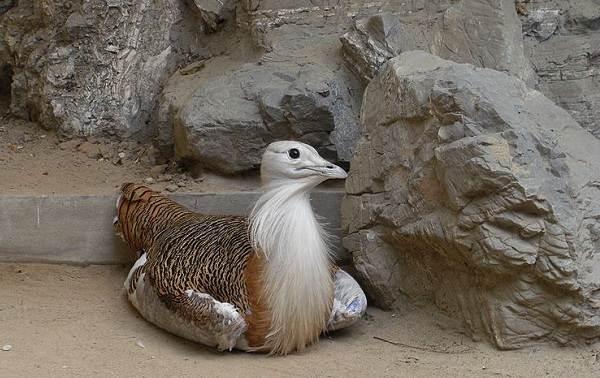 Животные-Алтайского-края-Описания-названия-и-особенности-животных-Алтая-11