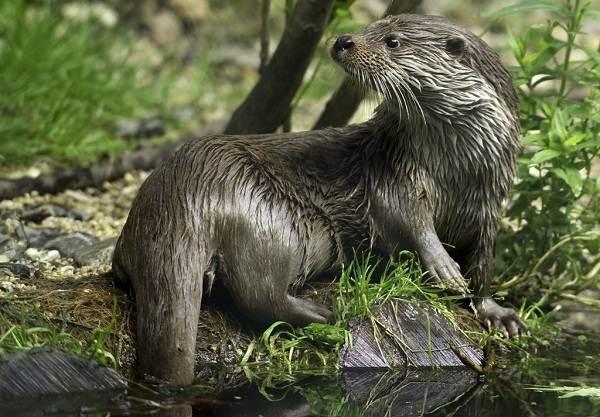 Животные-Алтайского-края-Описания-названия-и-особенности-животных-Алтая-19