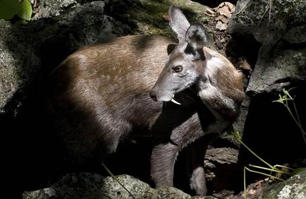 Животные-Алтайского-края-Описания-названия-и-особенности-животных-Алтая-33