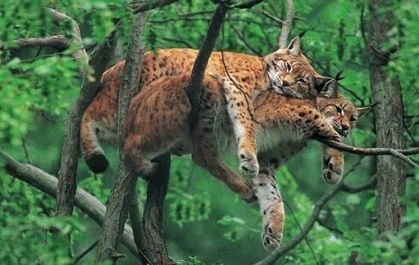 Животные-Алтайского-края-Описания-названия-и-особенности-животных-Алтая-36