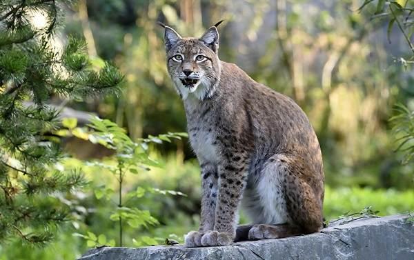 Животные-Алтайского-края-Описания-названия-и-особенности-животных-Алтая-37