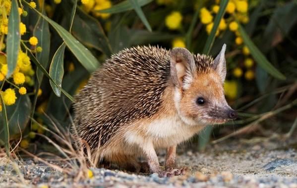 Животные-Алтайского-края-Описания-названия-и-особенности-животных-Алтая-42