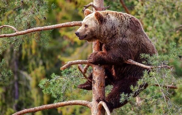 Животные-Алтайского-края-Описания-названия-и-особенности-животных-Алтая-47