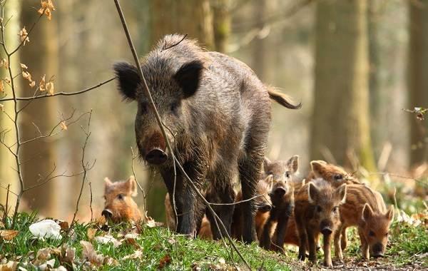 Животные-Алтайского-края-Описания-названия-и-особенности-животных-Алтая-62
