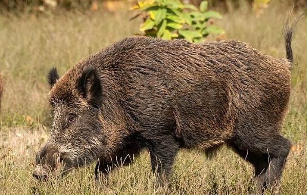 Животные-Алтайского-края-Описания-названия-и-особенности-животных-Алтая-63