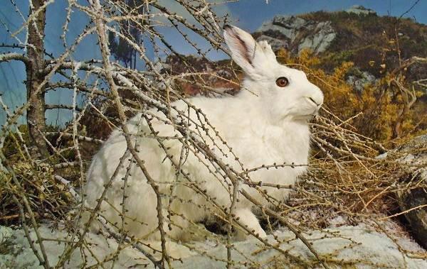 Животные-Алтайского-края-Описания-названия-и-особенности-животных-Алтая-64