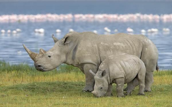 Животные-саванны-Описания-названия-и-особенности-животных-саванны-13