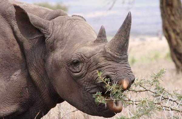 Животные-саванны-Описания-названия-и-особенности-животных-саванны-14