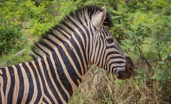 Животные-саванны-Описания-названия-и-особенности-животных-саванны-18