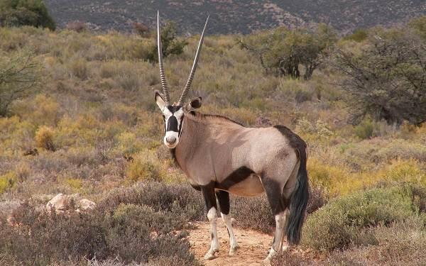 Животные-саванны-Описания-названия-и-особенности-животных-саванны-19