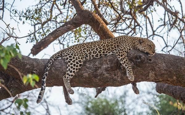 Животные-саванны-Описания-названия-и-особенности-животных-саванны-26