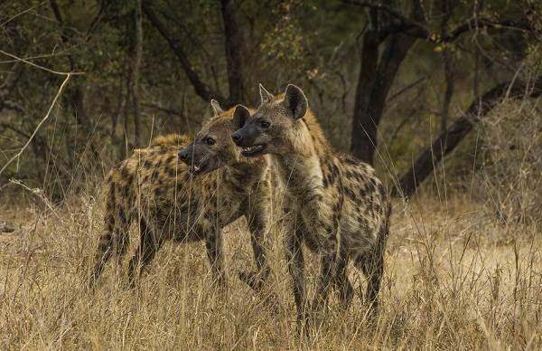 Животные-саванны-Описания-названия-и-особенности-животных-саванны-41
