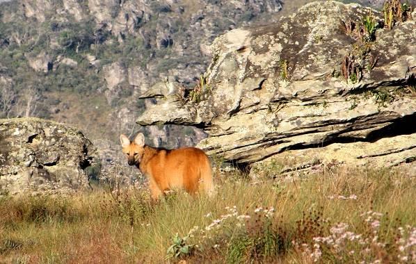 Животные-саванны-Описания-названия-и-особенности-животных-саванны-45