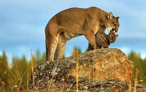Животные-саванны-Описания-названия-и-особенности-животных-саванны-46