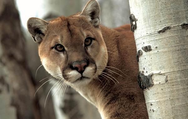 Животные-саванны-Описания-названия-и-особенности-животных-саванны-47