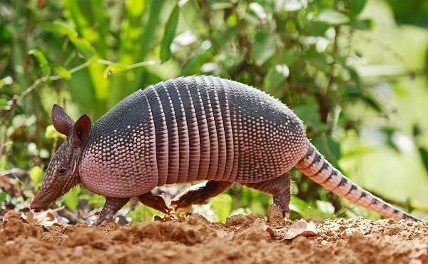 Животные-саванны-Описания-названия-и-особенности-животных-саванны-48