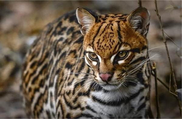 Животные-саванны-Описания-названия-и-особенности-животных-саванны-52