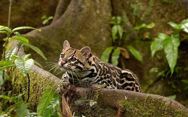Животные-саванны-Описания-названия-и-особенности-животных-саванны-53