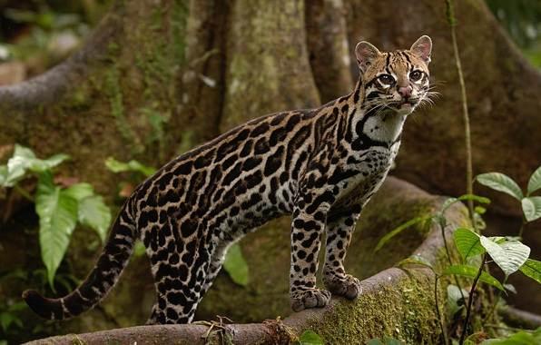 Животные-саванны-Описания-названия-и-особенности-животных-саванны-54