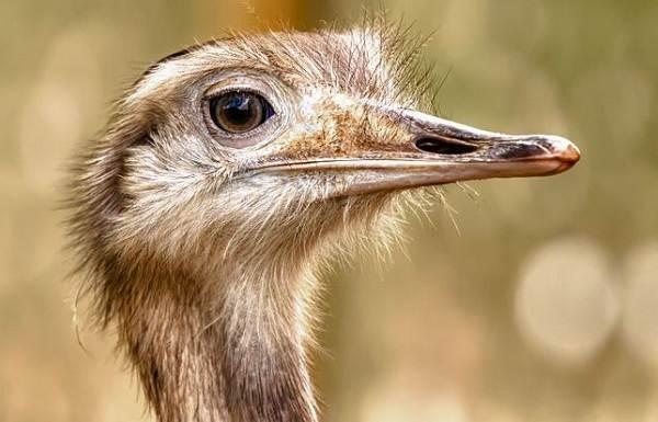 Животные-саванны-Описания-названия-и-особенности-животных-саванны-56