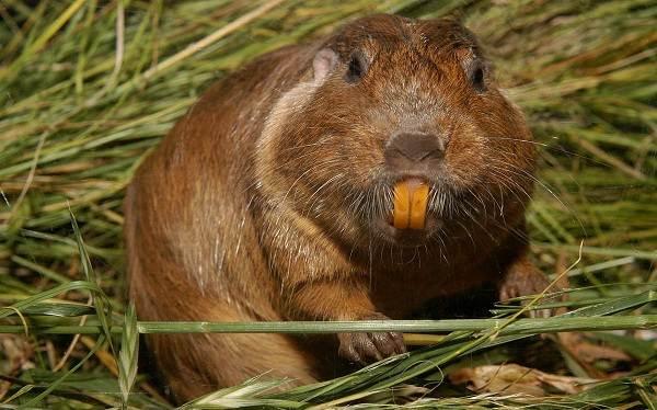 Животные-саванны-Описания-названия-и-особенности-животных-саванны-58