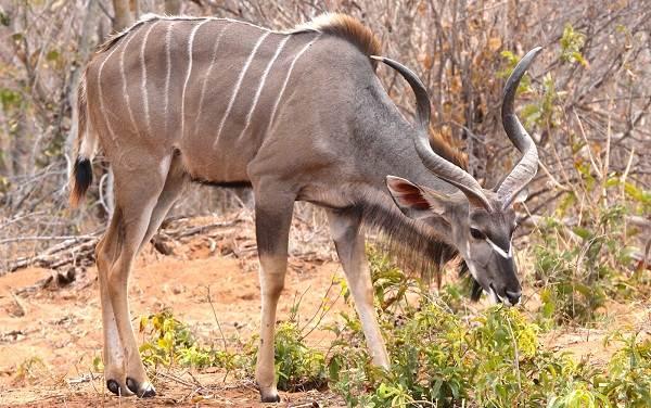 Животные-саванны-Описания-названия-и-особенности-животных-саванны-6
