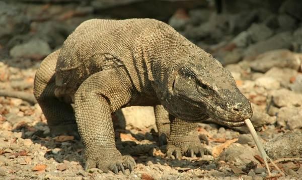 Животные-саванны-Описания-названия-и-особенности-животных-саванны-61
