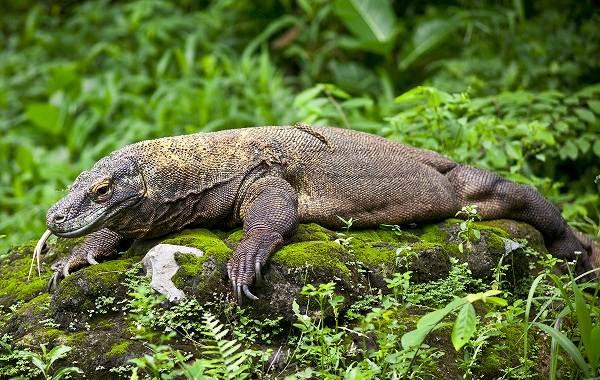 Животные-саванны-Описания-названия-и-особенности-животных-саванны-62
