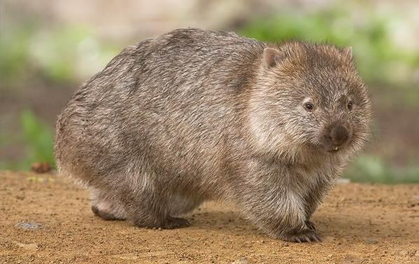 Животные-саванны-Описания-названия-и-особенности-животных-саванны-63