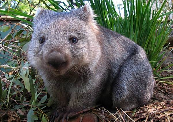 Животные-саванны-Описания-названия-и-особенности-животных-саванны-64